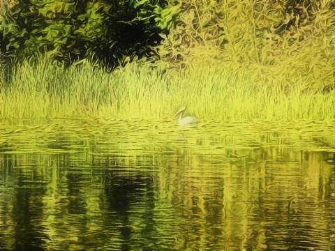 Lake Bomoseen (round 4)